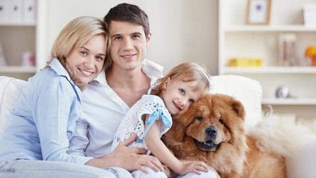 Wills & Trusts dog-young-family Direct Wills Allesley Green